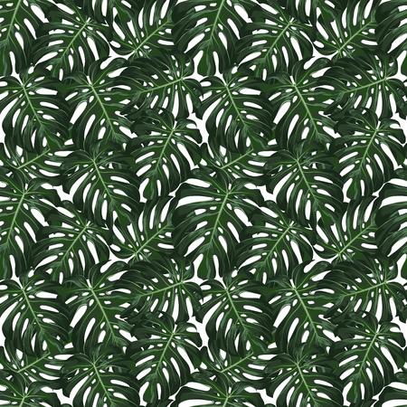 Monstera tropical deja patrón transparente sobre fondo blanco. ilustración vectorial Foto de archivo - 73450056