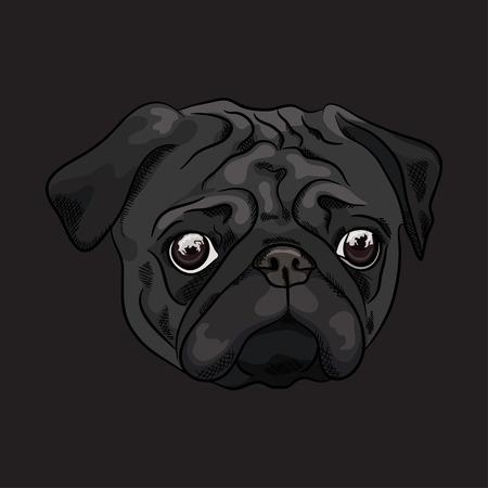 Portrait of a black pug on dark background. Vector illustration