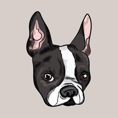 Lindo retrato de bulldog francés. Cabeza de perro Ilustración vectorial Foto de archivo - 88966508