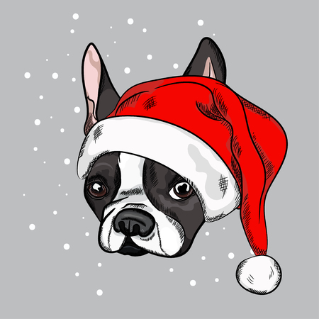 Portrait of cute french bulldog in red christmas hat on gray background. Vector illustration. Santa Claus. New Years and Christmas.