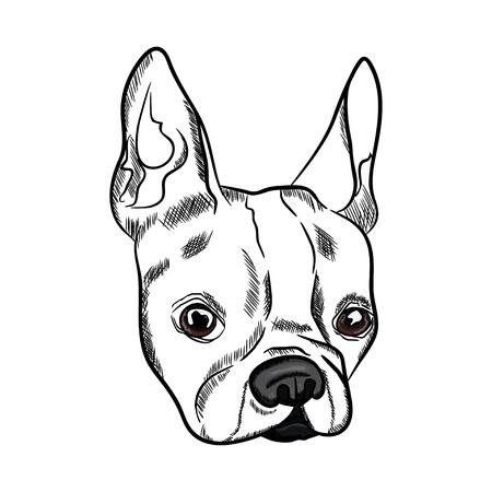 Bosquejo del esquema de la cabeza del dogo francés en el fondo blanco. Ilustración vectorial Foto de archivo - 88966511