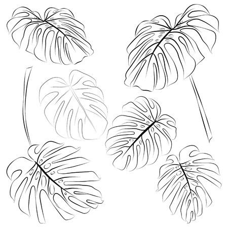 Conjunto de monstera tropical hojas de contorno. Ilustración vectorial Foto de archivo - 88966509