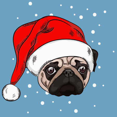 Portrait of cute pug in christmas hat on blue background. Vector illustration. Santa Claus. New Year's and Christmas.