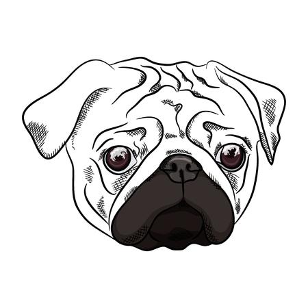 Outline Pug dog head on white background. Vector illustration
