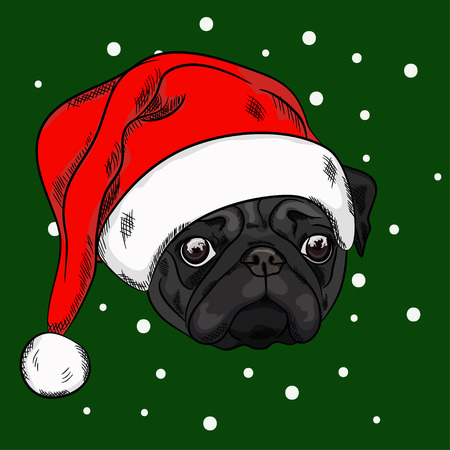 Portrait of a black pug in christmas hat on green background. Vector illustration
