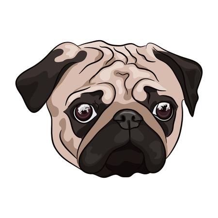 Pug cabeza sobre fondo blanco. Perro de dibujos animados. Ilustración vectorial Foto de archivo - 89027154