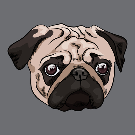 Portrait of sad pug on gray background. Vector illustration