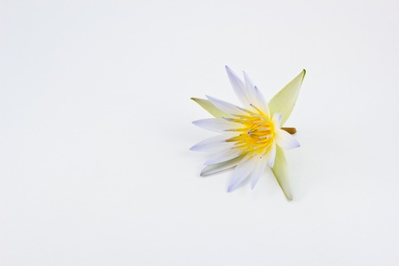 Flower lotus isolated on white background photo