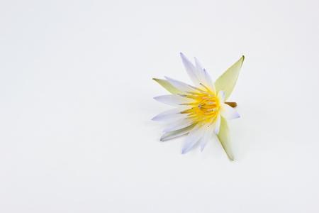 Flower lotus isolated on white background photo