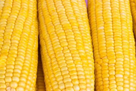 fresh corn background at market photo