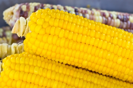 fresh corn in boiling water at market photo