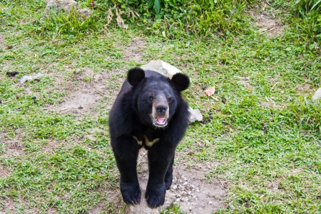 similar images preview: Asiatic Black Bear in Zoo Stock Photo