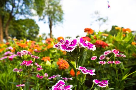 beautiful flower in the garden Stock Photo - 16399022