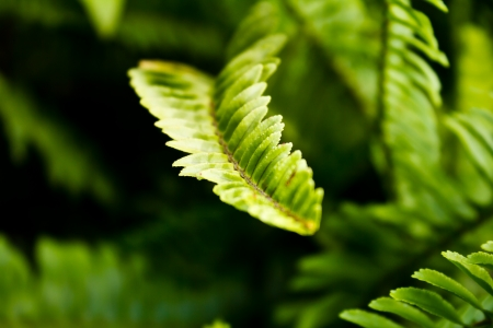 Fern leaves close-up natural background Stock Photo - 17094178