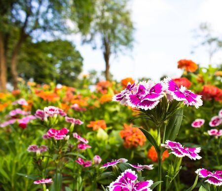 beautiful flower in the garden Stock Photo - 17094162