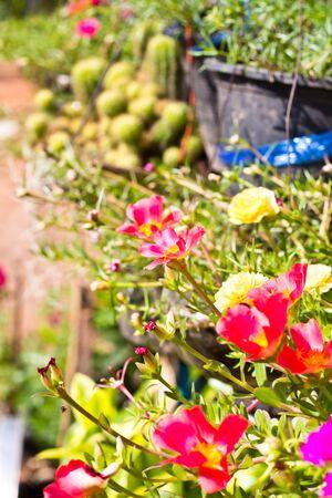 beautiful flower in the garden Stock Photo - 18784069