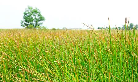 meadow landscape  green grass photo