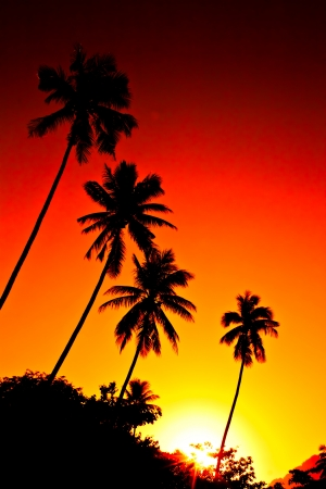 Palm tree silhouette at sunset, photo