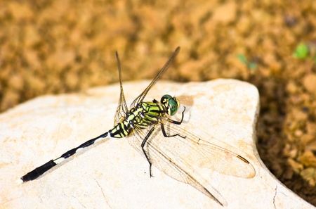 A green dragonfly on the stone Stock Photo - 19668132