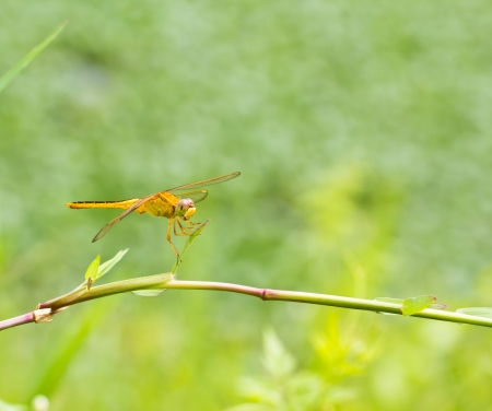 A dragonfly resting on a branch photo