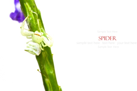 Spiders on the green twigs (with sample text) Stock Photo - 20327360