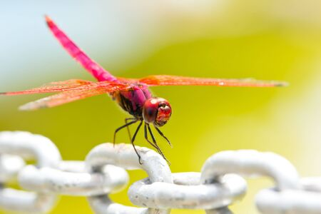 A red dragonfly resting on a chain Stock Photo - 20621366