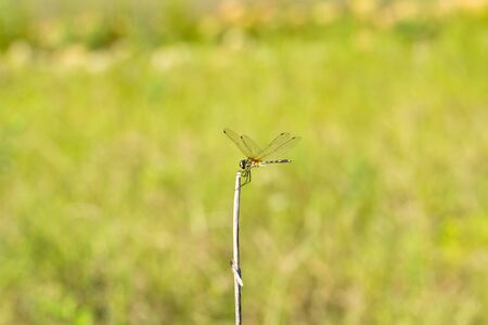 A dragonfly resting on a branch Stock Photo - 20621376