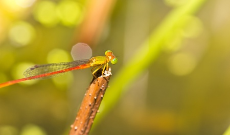 A dragonfly resting on a branch