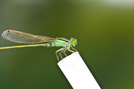 A dragonfly resting on a white branch Stock Photo
