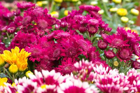 beautiful flower in market flower