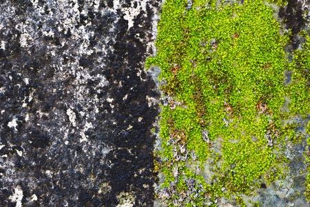 Musgo verde sobre as antigas muralhas