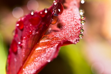 Fresh leaf with dew drops close up photo