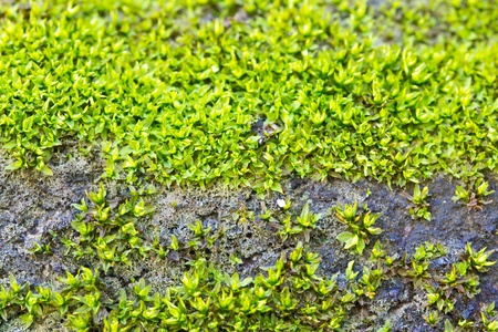 Green moss on the old walls  photo