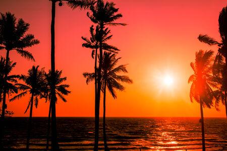 bounty: silueta de las palmeras en la puesta de sol playa tropical Foto de archivo