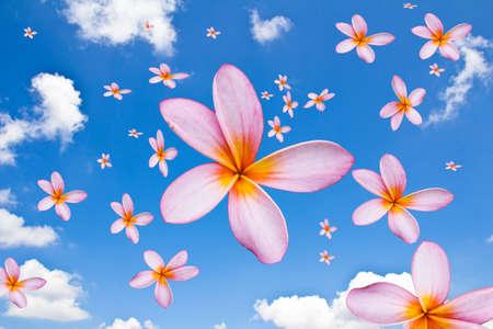 Blossoms que caem do c