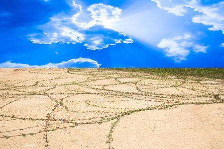 Green plant growing through sand soil photo