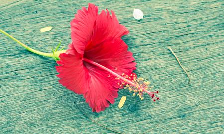 Red flower on wood floor vintage style