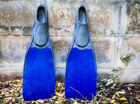 schwimmflossen: fins or flippers Lizenzfreie Bilder