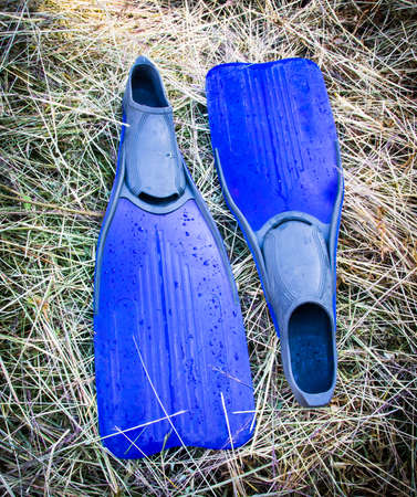 flippers: fins or flippers Stock Photo