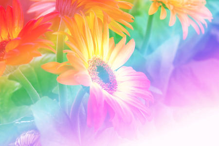 burgundy colour: Close up orange flower