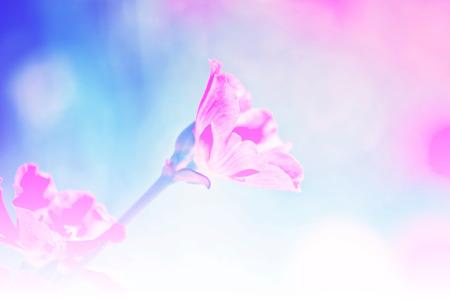 lindi: beautiful flower in the garden