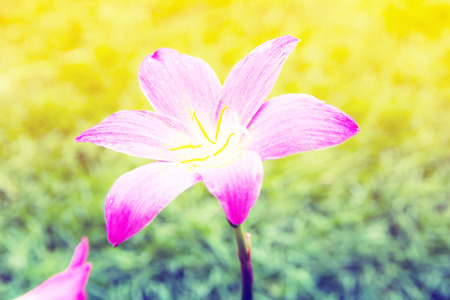pink flowers growing.