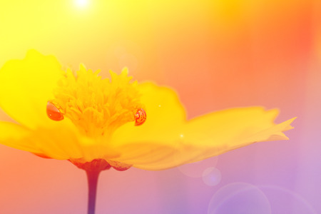 descriptive colours: beautiful yellow  flower with color filters