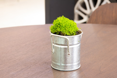 Ornamental plants on table