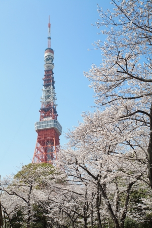 Tokyo Tower at cherry blossom time  photo