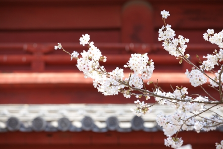 Blossom against  photo