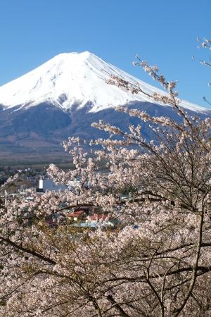 fuji: Mountain Fuji in spring ,Cherry blossom Sakura