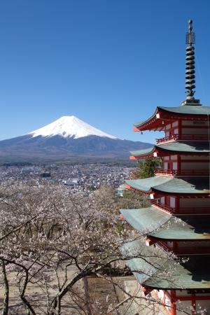 snow covered mountain: Mountain Fuji in spring ,Cherry blossom Sakura