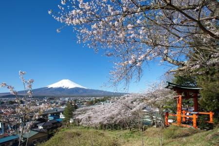 fuji: Mountain Fuji in spring ,Cherry blossom Sakura  Stock Photo