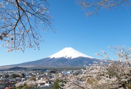 kersenbloesem: Berg Fuji in de lente, Cherry blossom Sakura Stockfoto